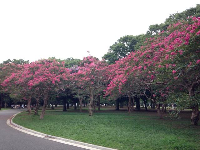 代々木公園 デング熱