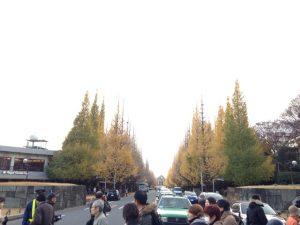 神宮外苑 イチョウ並木