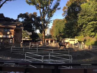 明治神宮裏のポニー公園