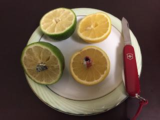 ビクトリーノックスのウェイターでレモンとライムを切ったところ