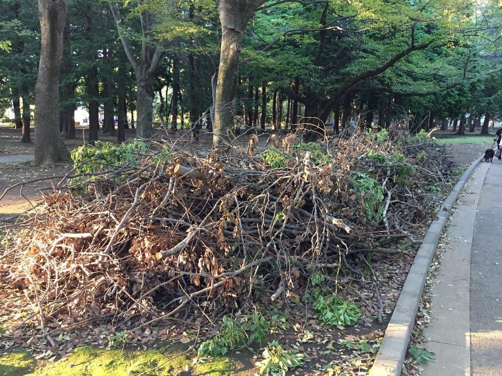 台風の暴風雨で落ちて集められた代々木公園の木の枝