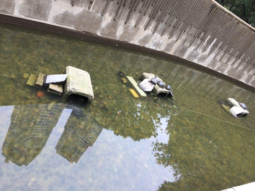 新宿中央公園の亀池と水面に映る都庁