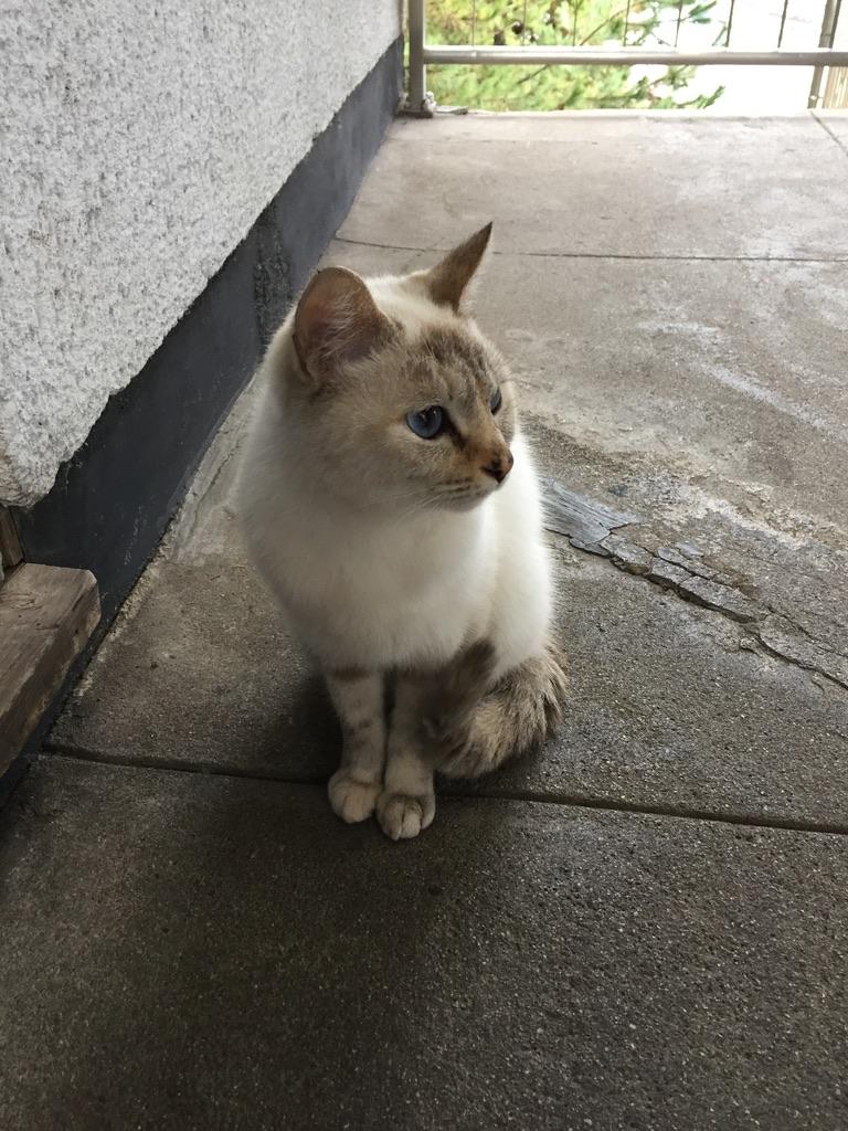 千光寺ロープウェイにいた猫